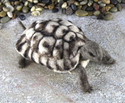 Needle felting kit : World of Wool : Toto the Tortoise