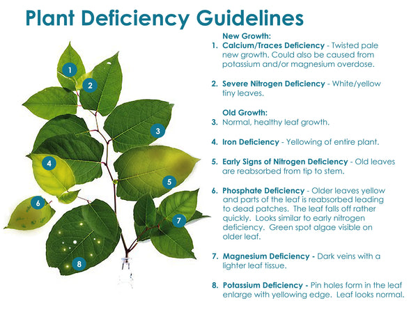 Plant Deficiency Guidelines