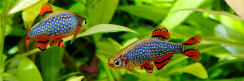 What's Arrived and What's Coming Freshwater Fish