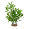 "Fluval Aqualife Plant Scapes White-Tipped Ludwigia 8""/20cm"