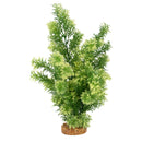 "Fluval Aqualife Plant Scapes White-Tipped Hottonia 14""/35.5cm"