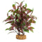 "Fluval Aqualife Plant Scapes Broad Leaf Red Ludwigia 10""/25.5cm"