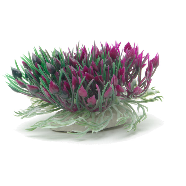 "Marina Betta Purple Hearts Shrub 3""/7.6cm"