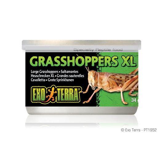 Exo Terra Canned Grasshoppers XL 34g/1.2oz