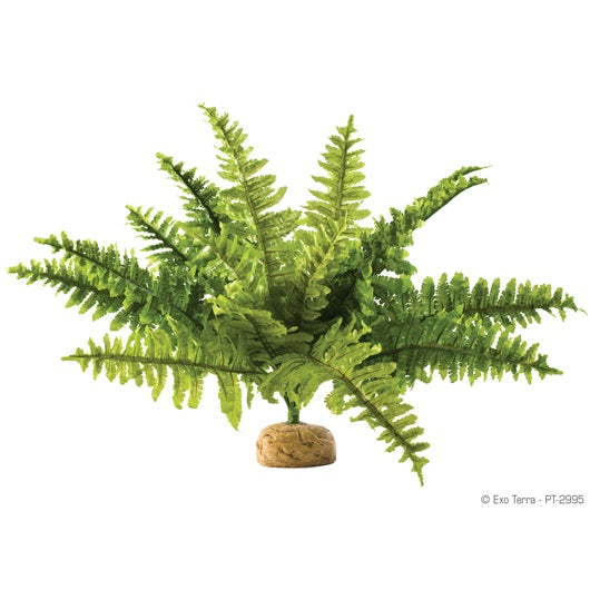 Exo Terra Rainforest Plant (Boston Fern)