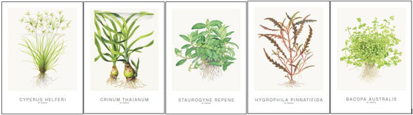 Tropica 5 Assorted Art Cards Incl. Cyperus