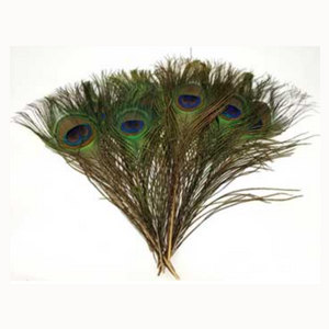 Peacock feather (pk of 10)