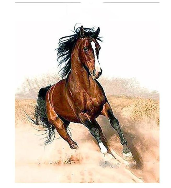 Muse D'art Running Horse DIY Painting By Numbers  - Be your own artist!