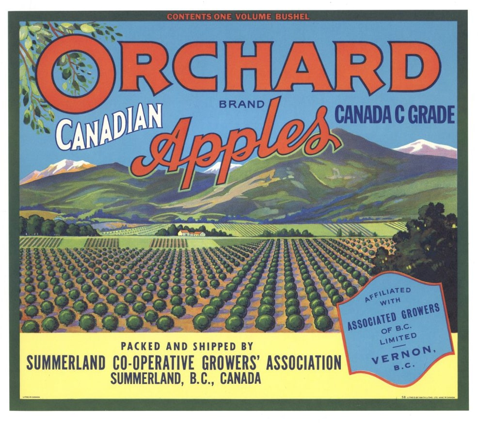 Orchard Brand Vintage Canadian Apple Crate Label