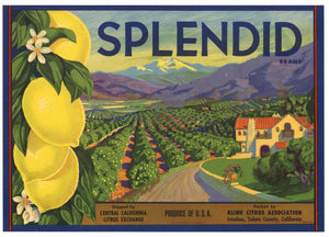 Splendid Brand VintageTulare County California Lemon Crate Label