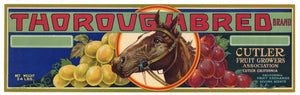 Thoroughbred  Brand Vintage Cutler Grape Crate Label