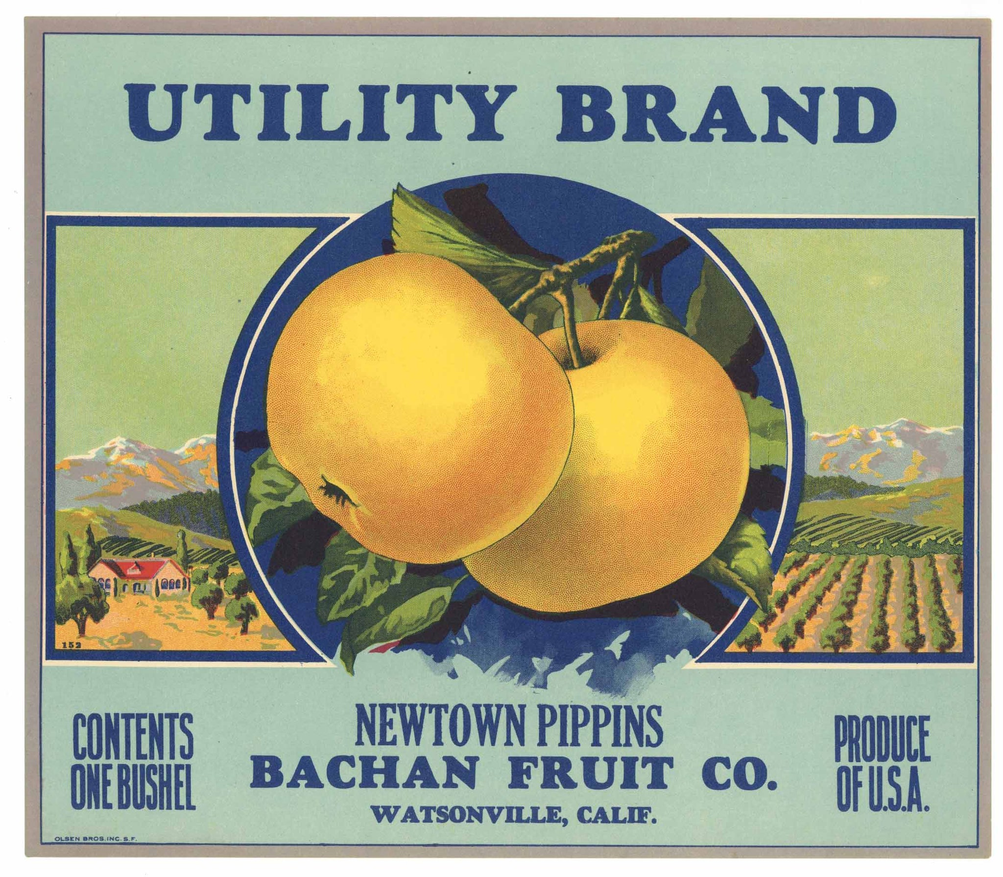 Utility Brand Vintage Watsonville Apple Crate Label