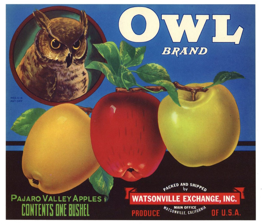 Owl Brand Vintage Watsonville Apple Crate Label
