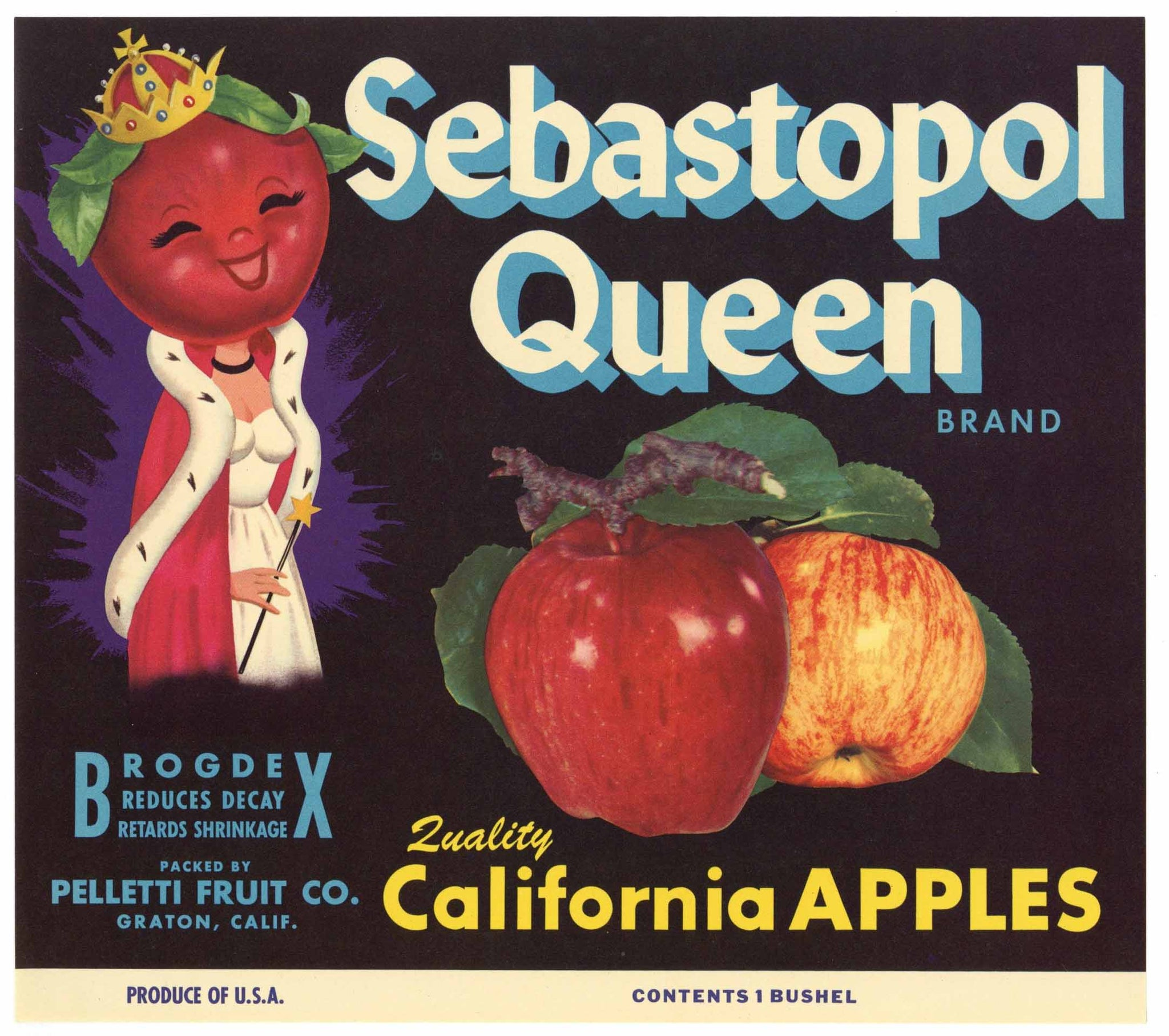 Sebastopol Queen Brand Vintage Apple Crate Label