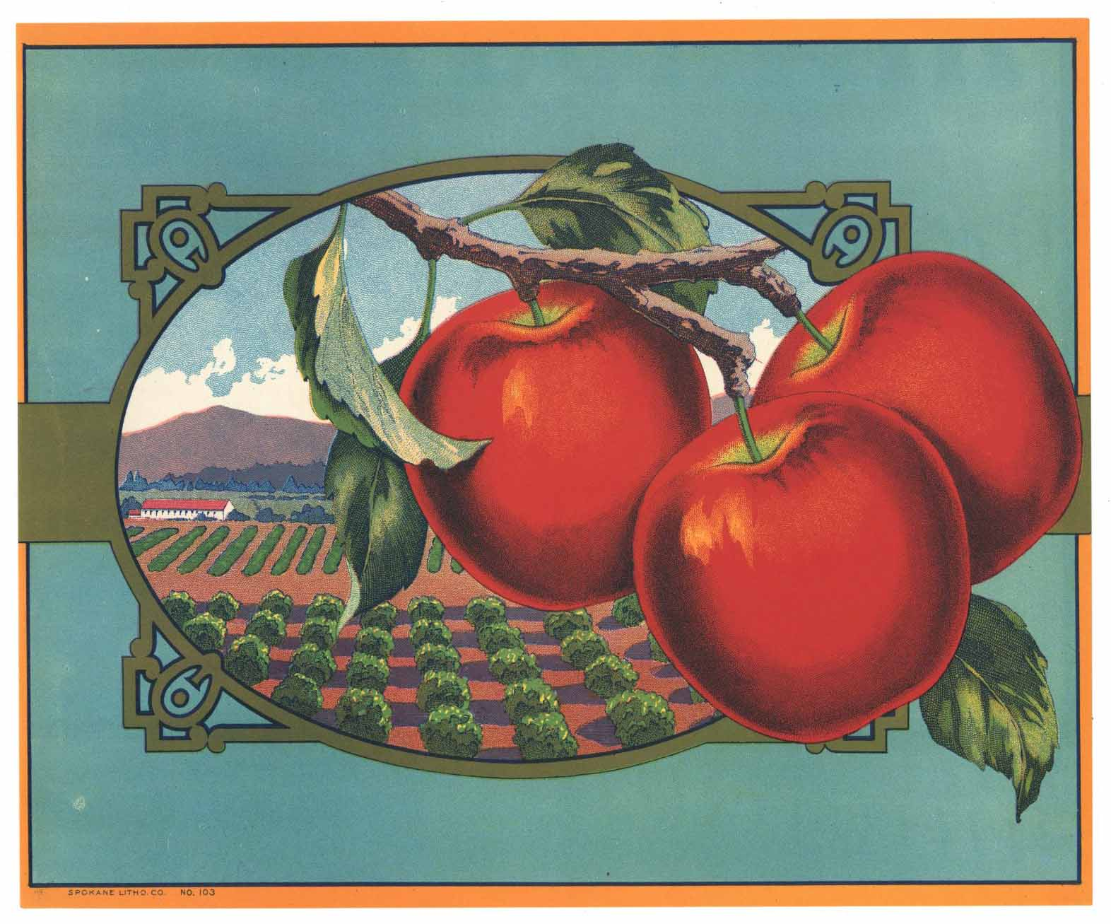 Stock No. 103 Vintage Apple Crate Label