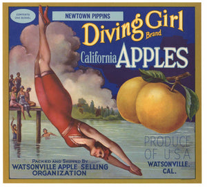 Diving Girl Brand Vintage Watsonville Apple Crate Label Wnp
