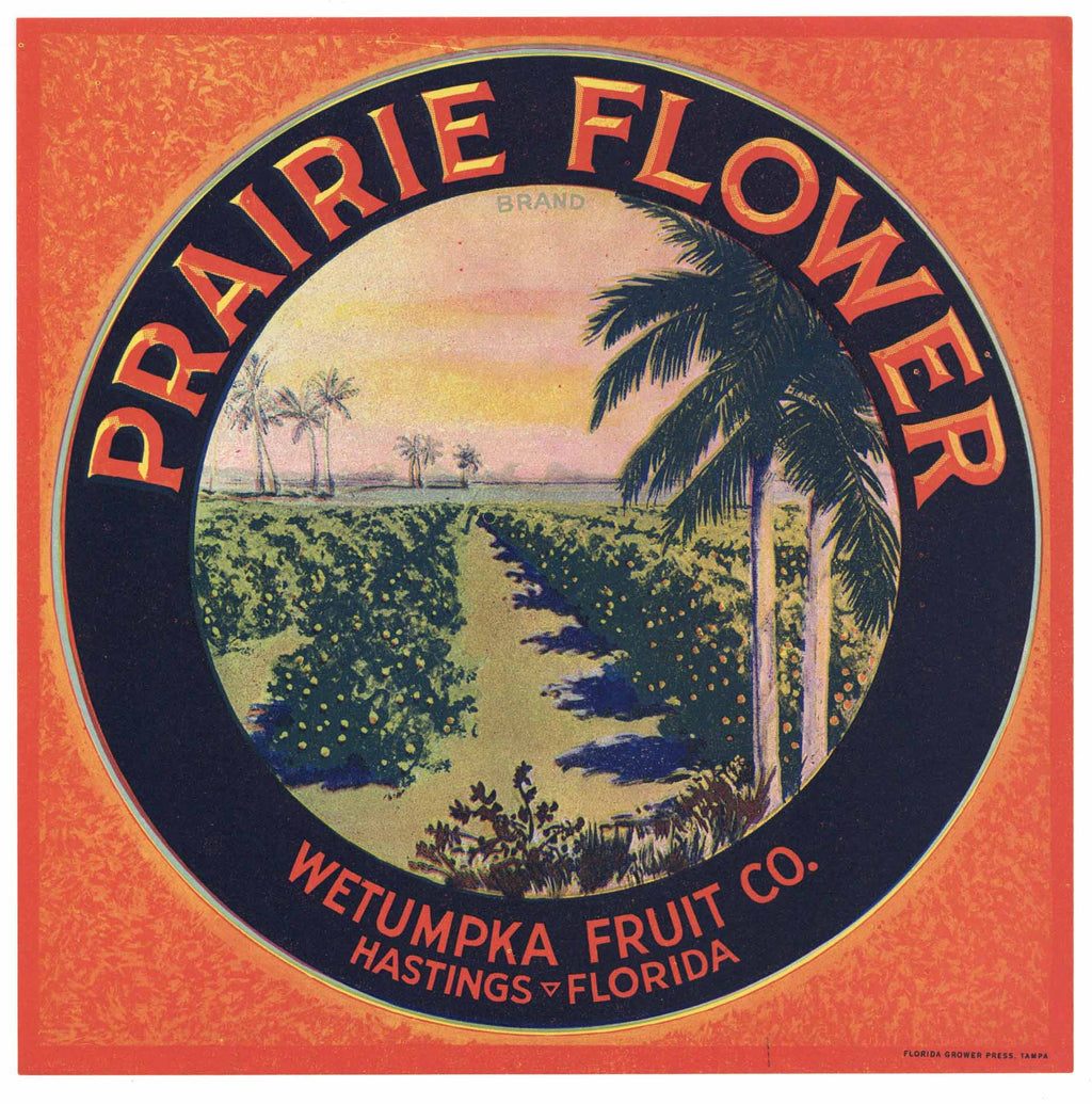 Prairie Flower Brand Vintage Hastings Florida Citrus Crate Label, L