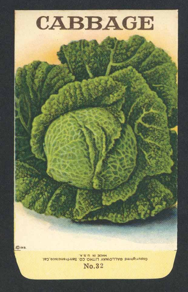 Cabbage Antique Stock Seed Packet