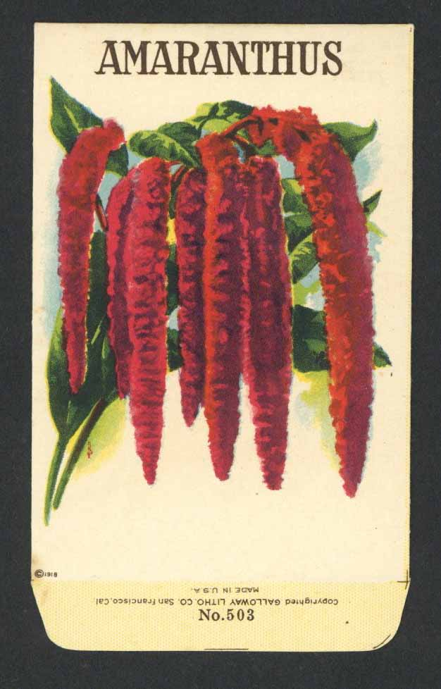 Amaranthus Antique Stock Seed Packet