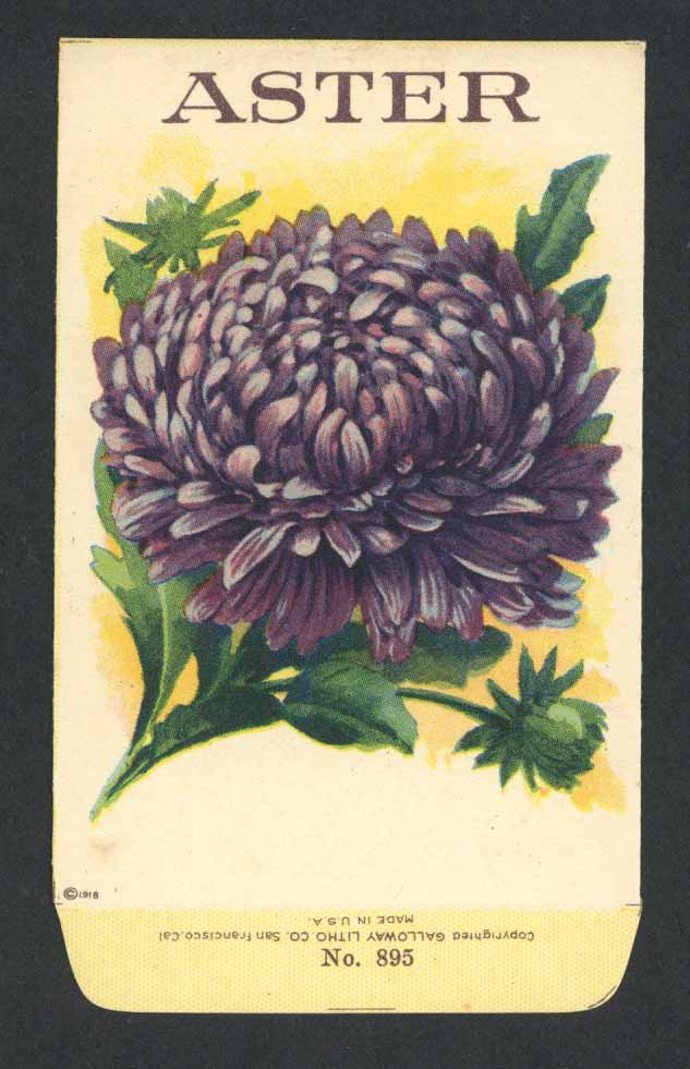 Aster Antique Stock Seed Packet