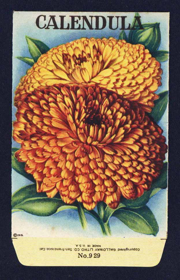 Calendula Antique Stock Seed Packet