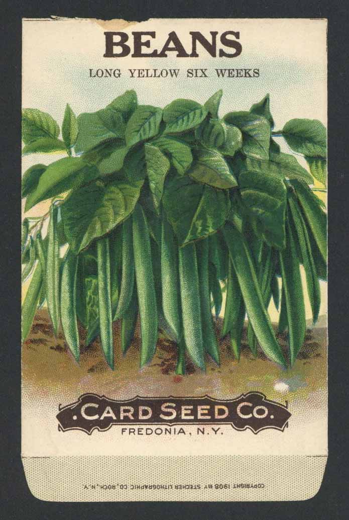 Beans Antique Card Seed Co. Seed Packet, Long Yellow