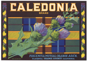Caledonia Brand Vintage Placentia Lemon Crate Label