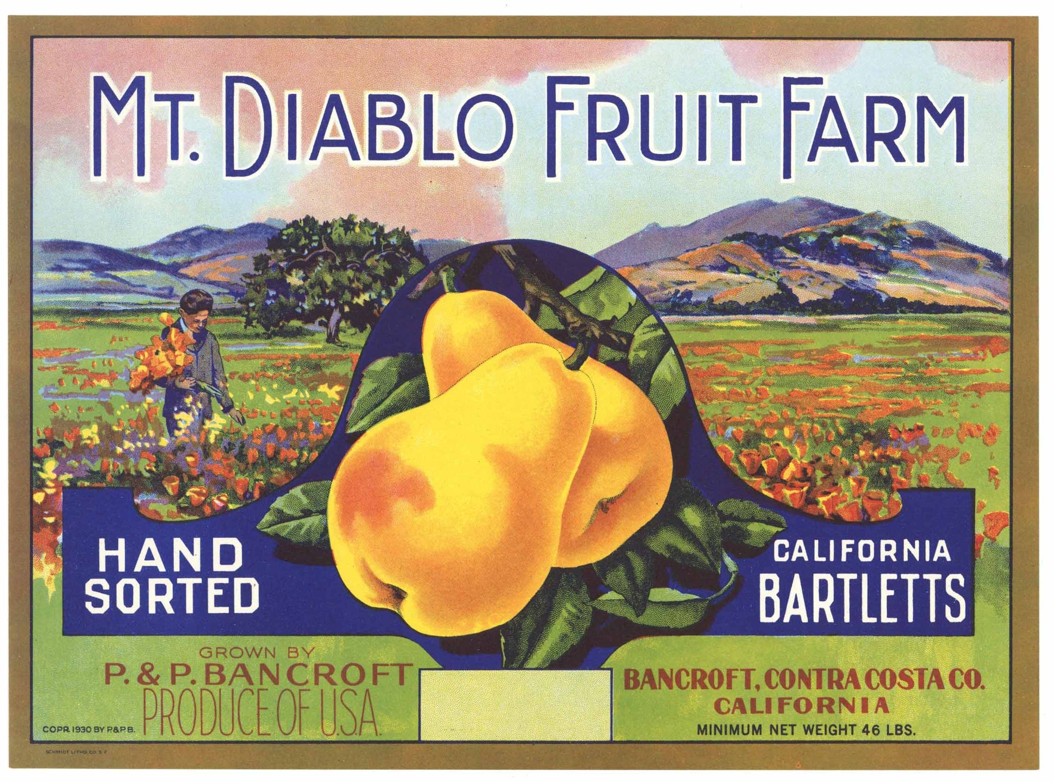 Mt. Diablo Fruit Farm Brand Vintage Contra Costa Pear Fruit Crate Label