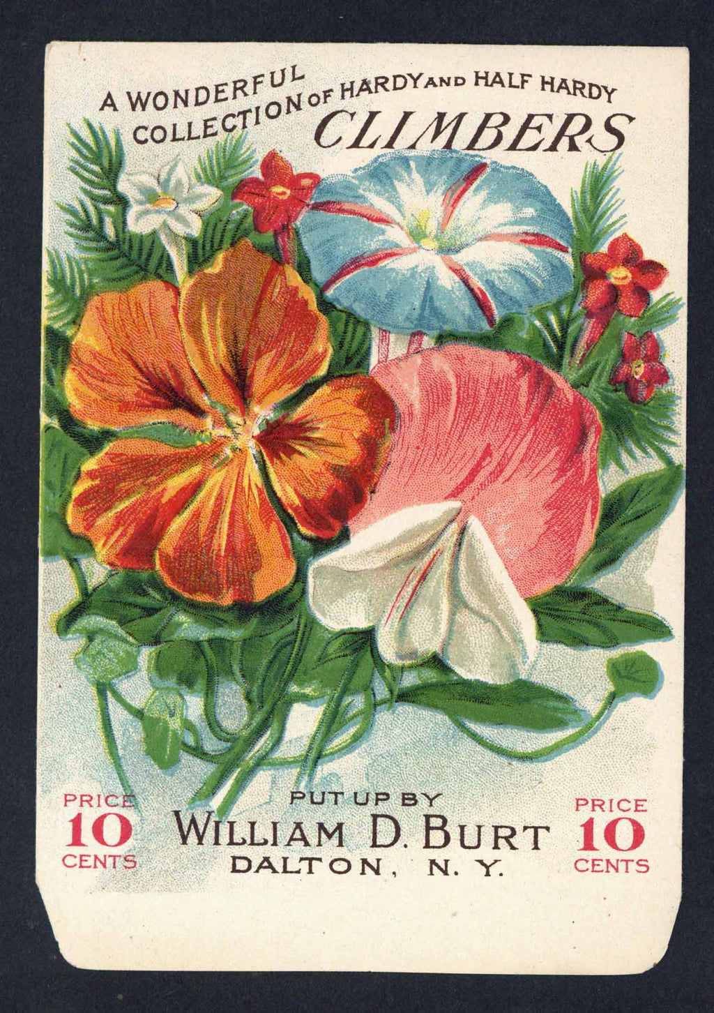 Climbers Antique Burt's Seed Packet