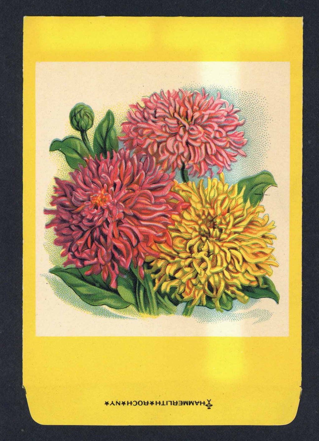 Zinnia Antique Stock Seed Packet, Hammerlith