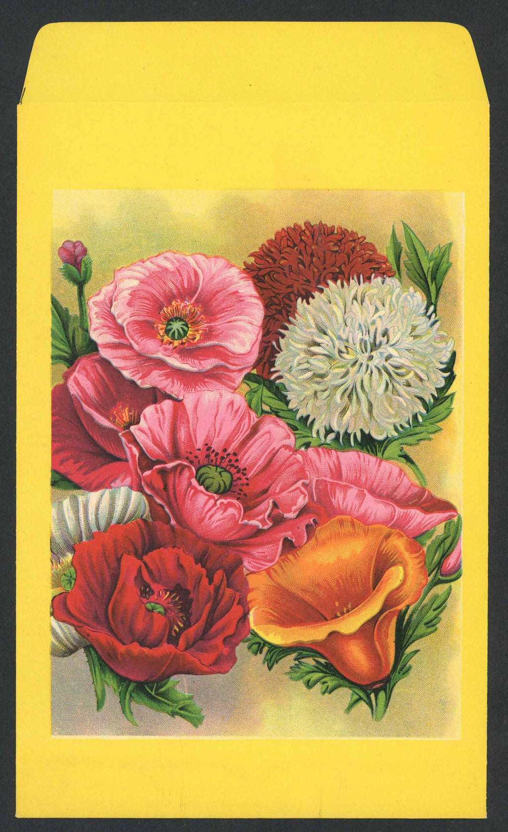Mixed Poppy Antique Stock Seed Packet, Large Packet