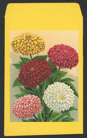 Zinnia Antique Stock Seed Packet, Large Packet