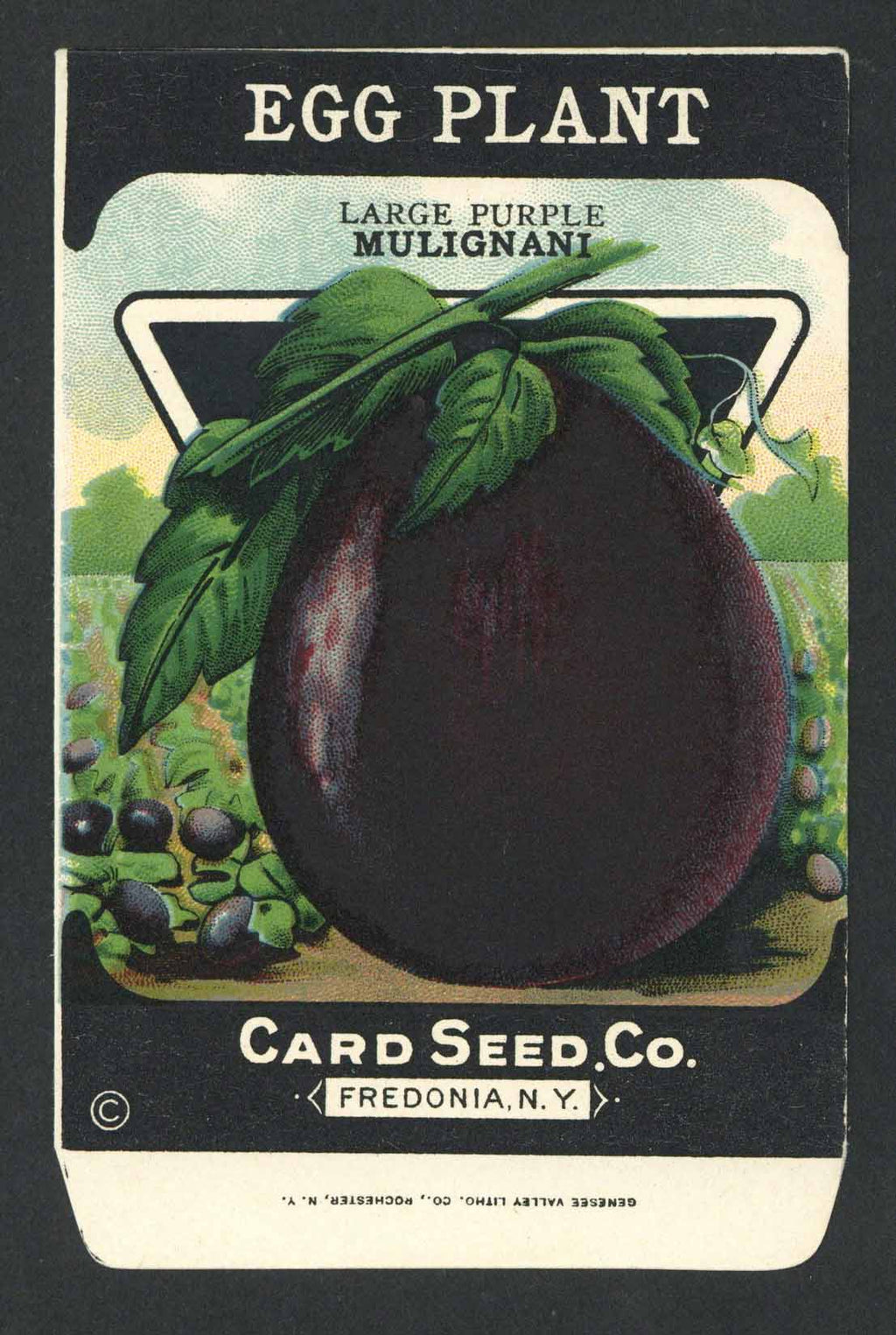 Egg Plant Antique Card Seed Co. Seed Packet