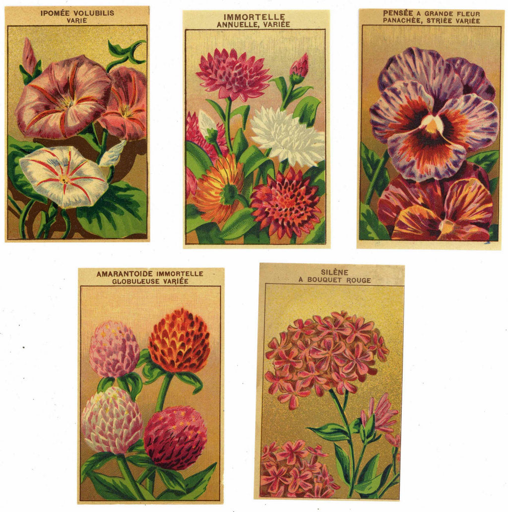 French Flower Antique Seed Packet Label Collection #4