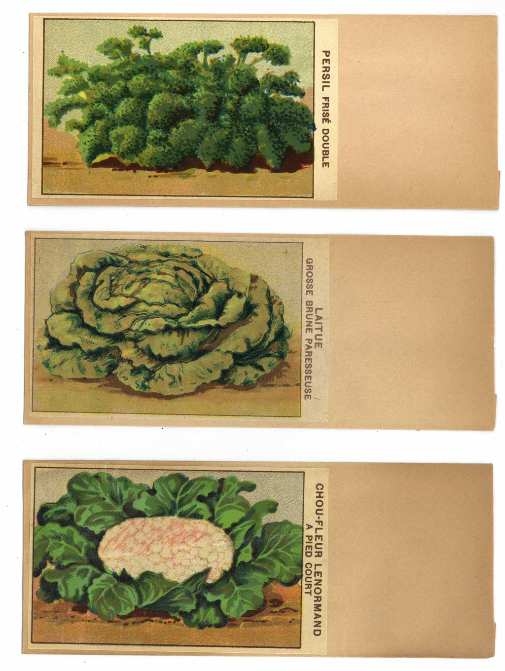 French Vegetable Antique Seed Packet Collection #12