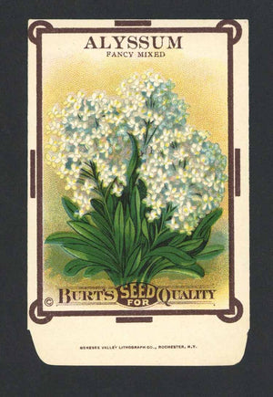 Alyssum Antique Burt's Seed Packet