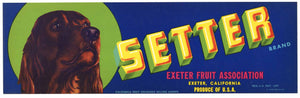 Setter Brand Vintage Exeter Fruit Crate Label, Dog