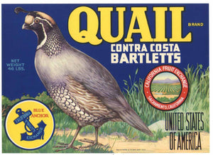 QUAIL Brand Vintage Pear Crate Label (P184)