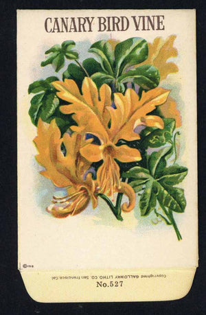 Canary Bird Vine Antique Stock Seed Packet