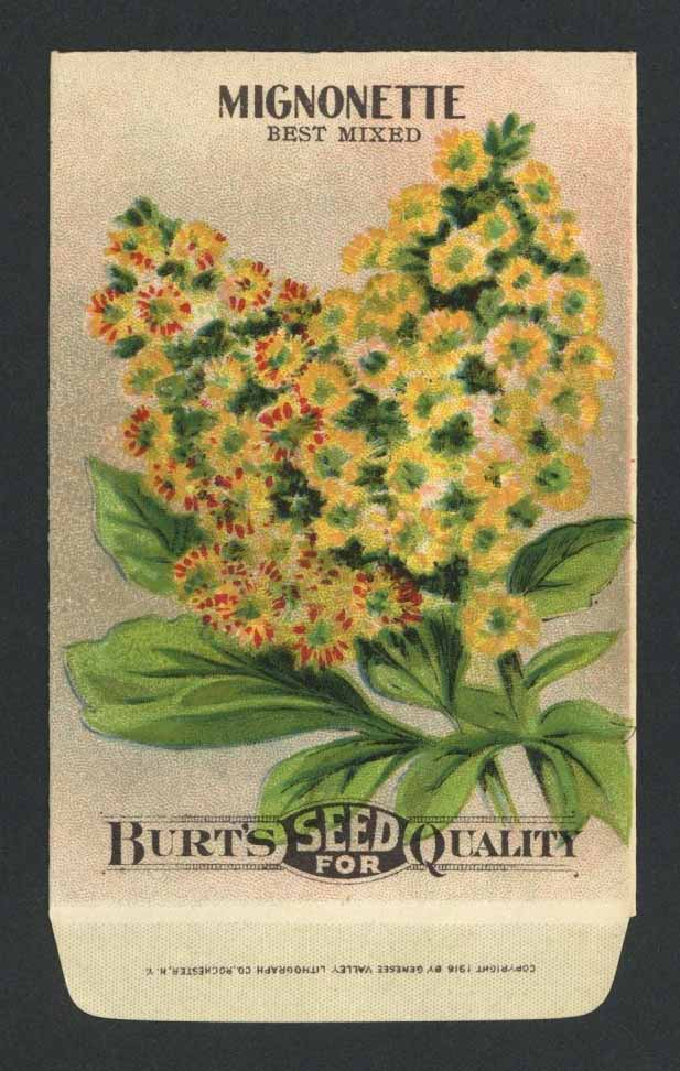 Mignonette Antique Burt's Seed Packet, Best Mixed