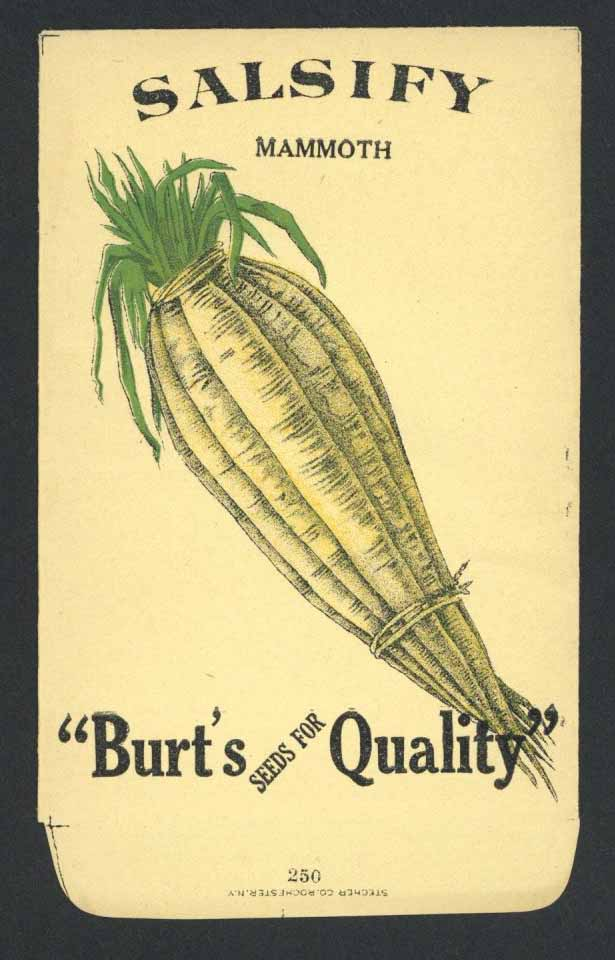 Salsify Antique Burt's Seed Packet, Mammoth