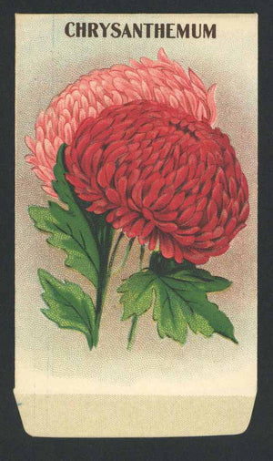 Chrysanthemum Antique Stock Seed Packet