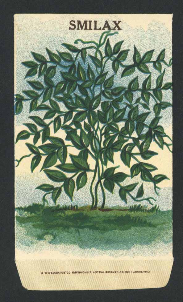 Smilax Antique Stock Seed Packet