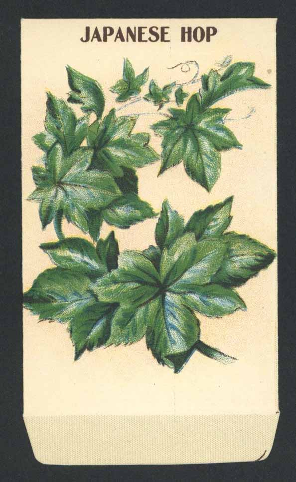 Japanese Hop Antique Stock Seed Packet