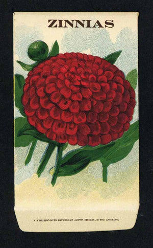Zinnias Antique Stock Seed Packet