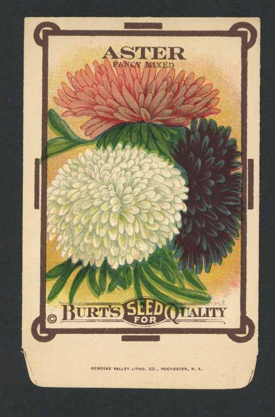 Aster Antique Burt's Seed Packet, Mixed