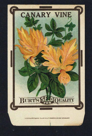 Canary Vine Antique Burt's Seed Packet