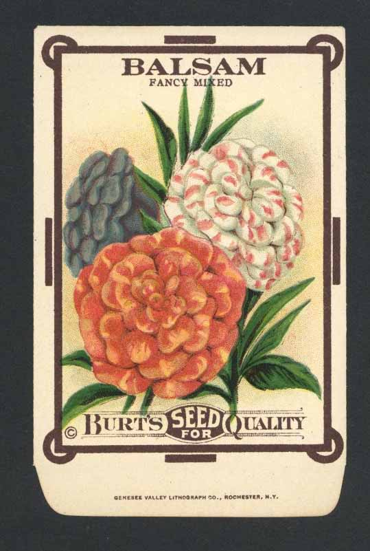 Balsam Antique Burt's Seed Packet