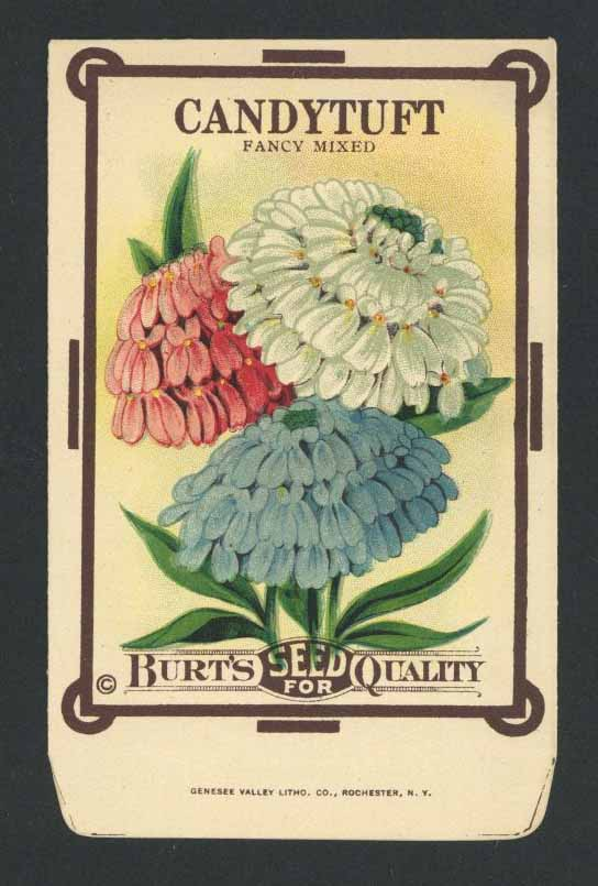 Candytuft Antique Burt's Seed Packet