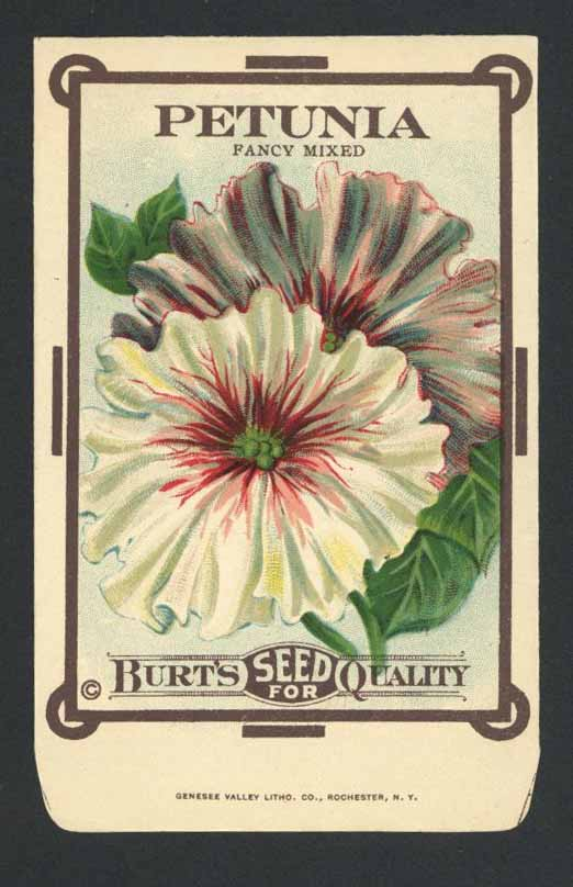 Petunia Antique Burt's Seed Packet